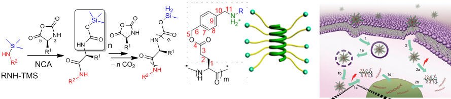 Polypeptide synthesis via ROP of NCA, helical charged polypeptide, gene/siRNA delivery